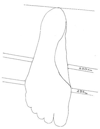 draw_feet